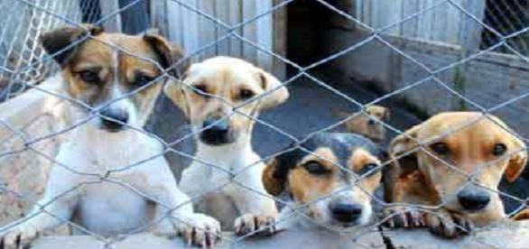 Na Madeira já está em vigor a nova lei onde proíbe o abate de animais de rua e de companhia.