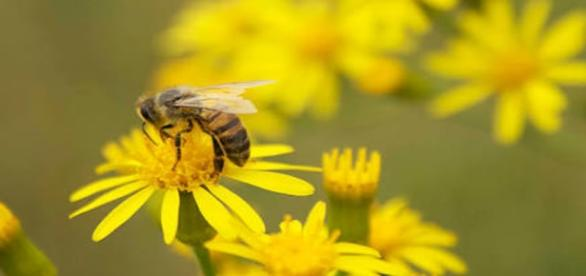 Como tantos outros seres vivos, as abelhas também estão em extinção. Saiba como isso pode afetar a humanidade.