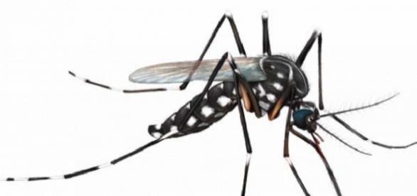 Pesquisa comprova relação do vírus zica a casos de microcefalia