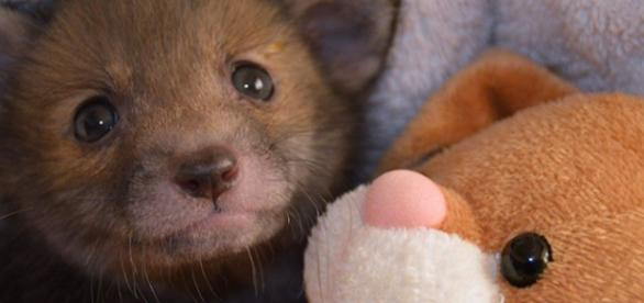 A raposinha Puggle com seu coelho de pelúcia