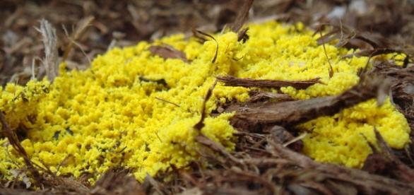El limo creciendo entre las hojas