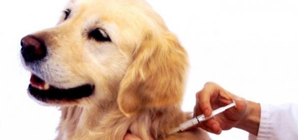 Animais têm uma opção a mais para cuidar da saúde