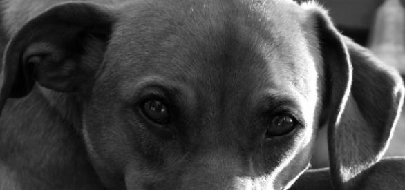 """Eyes"" Courtesy Flickr via Photopin Creative Commons"