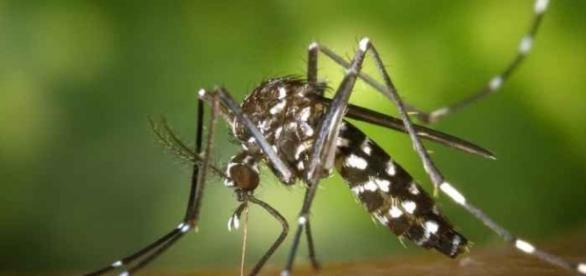 Nova espécie de mosquito descoberta em Rondônia