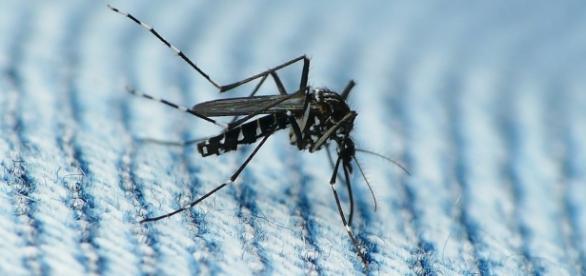 Primer informe nacional de la epidemia en Brasil