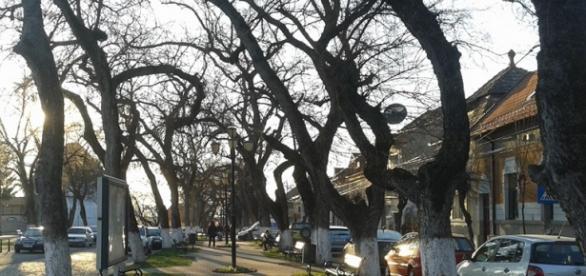 Bulevardul Cetatii din Targu Mures printre cele mai romantice din lume