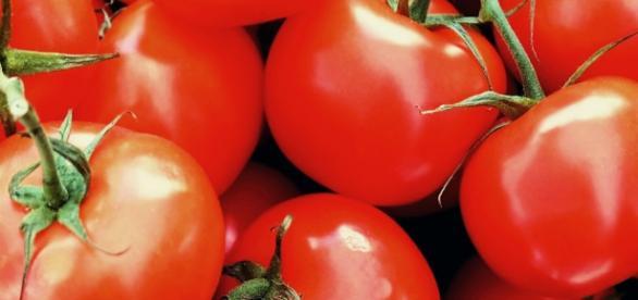 Holanda activa la alerta sanitaria por tomates con etefón provenientes de Almería