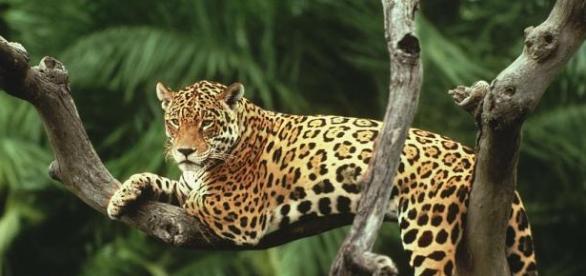 Tecnologia ajuda na preservação ambiental (Foto: Reprodução/World Wild Life)