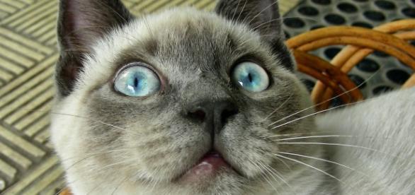 Un gato sobrenatural con los ojos abiertos