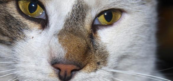 Morte de gato acaba na justiça (Imagem meramente ilustrativa/ Pixabay)