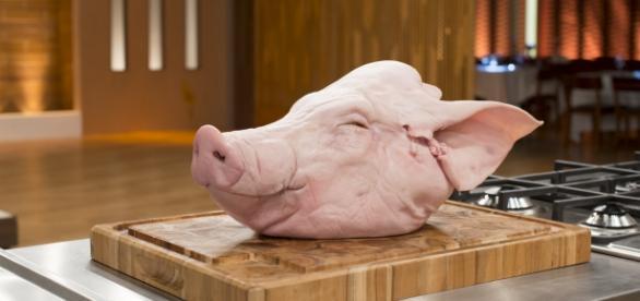 A Band vai apostar em cabeças de porcos no MasterChef desta terça-feira (17)