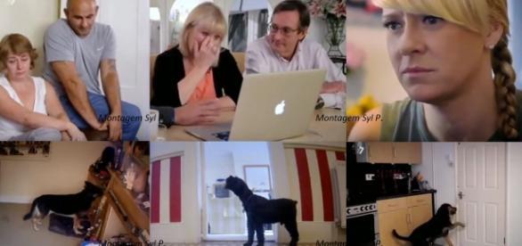 Donos se surpreenderam com a solidão de seus cães