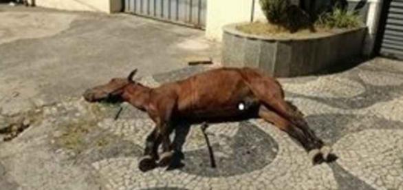 Cavalo agonizou até a morte (foto: reprodução)