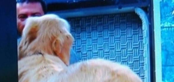 Tom Veiga aparece ao vivo em gafe no 'Mais Você'.
