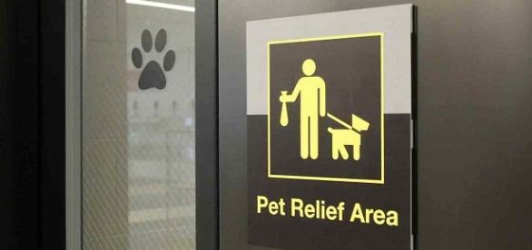 Área para mascotas del Aeropuerto John F. Kennedy