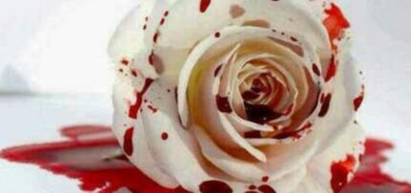 Mulher é assassinada por causa de um galho de rosa.