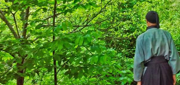 Shinrin Yoku la Ciencia avala los Beneficios de la Naturaleza