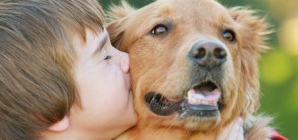 Crianças que têm contato com cães têm sistema imunológico fortalecido.