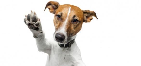 Macotas de moda, influencers,agencias que se centran en el perro influencer.