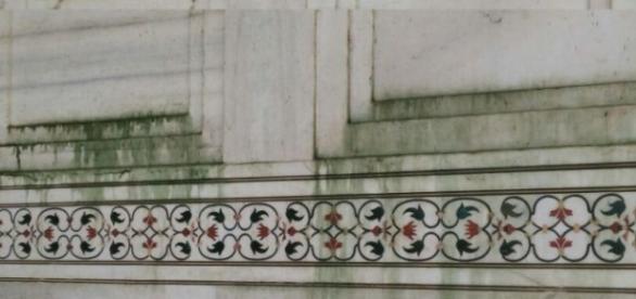 Manchas verdes en las paredes del Taj Mahal debido a una plaga de insectos