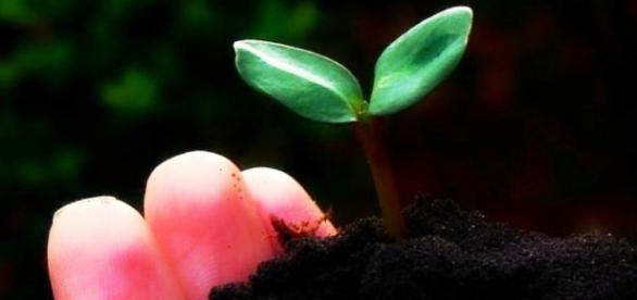 No dia das Mães, plante uma árvore pela Natureza