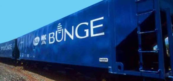 Há várias oportunidades na Bunge. Confira!