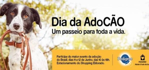 Evento é patrocinado pela Pedigree: Adotar é tudo de bom!