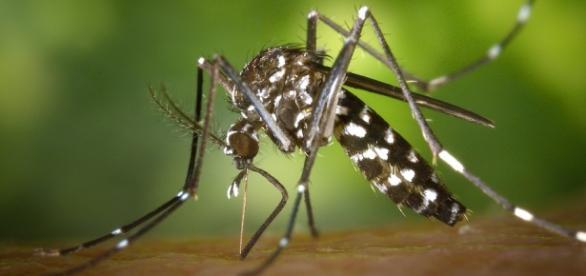Zika nas Olimpíadas do Rio de Janeiro