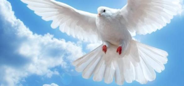 Iertarea este o virtute ce oferă sănătate sufletului tău!