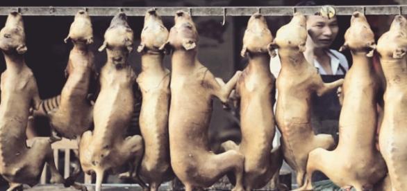 La entrada del verano da inicio al terrible festival de carne de perro de Yulin