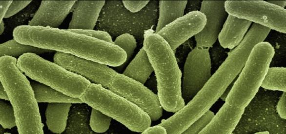 A doença é causada por um parasita denominado de Leishmania
