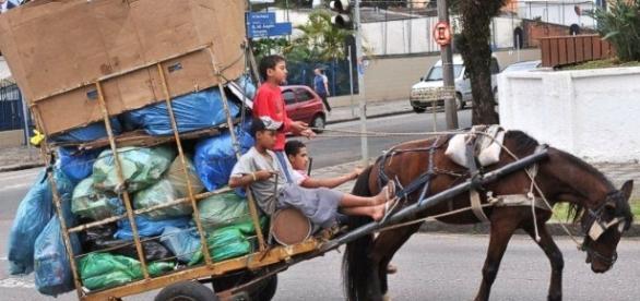 Lei vetada pelo prefeito proibia o uso de transportes de tração animal no município