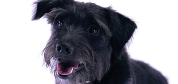 Casos de salud de mascotas en tv
