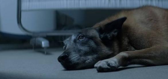 Vídeo do cãozinho que não abandona o dono