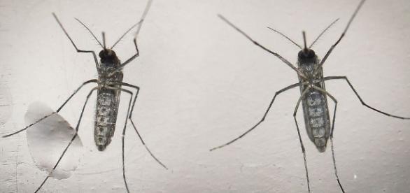 Espanha registra caso de transmissão de zika através de relação sexual.