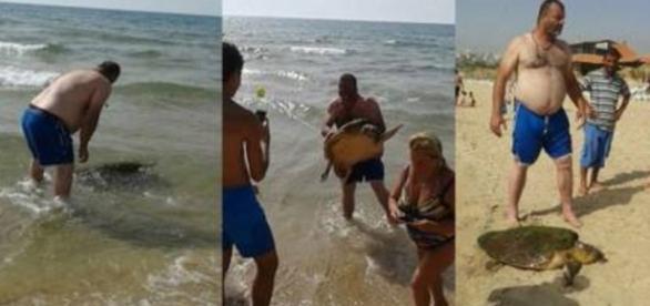 Grupo tira tartaruga do mar para tirar fotos