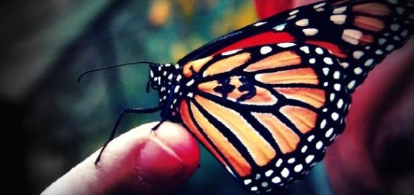 E se o bater das asas de uma borboleta mudasse tudo?
