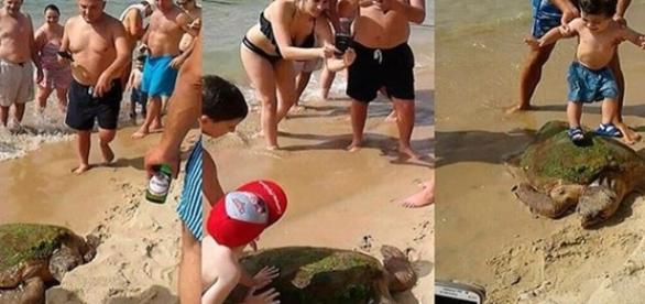 Tartaruga foi retirada do mar e pisada por turistas