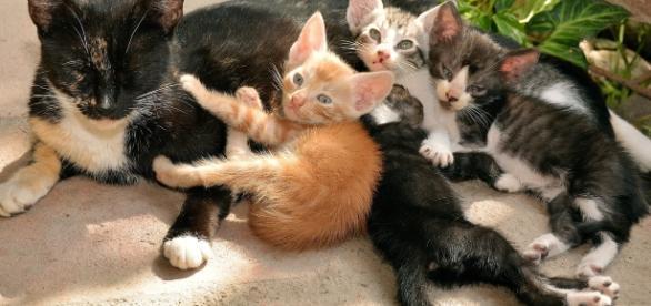Castração de gatos é necessária para impedir superpopulação (Imagem Shutterstock)