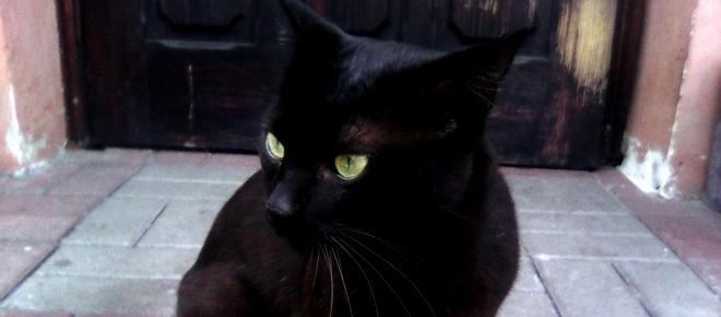 Po co komu kot czyli 8 powodów, dla których warto mieć kota