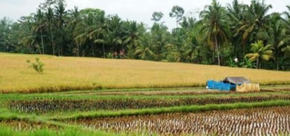 Nature Walk, près de la petite ville d'Ubud (Bali)