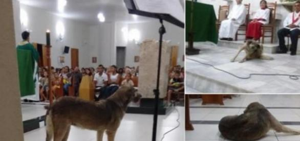 Cachorra gosta de assistir à missa - Foto/Montagem