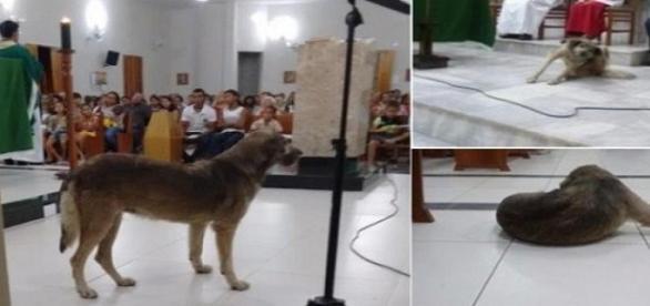 Padre sugeriu que cadela que frequenta igreja na Paraíba fosse sacrificada