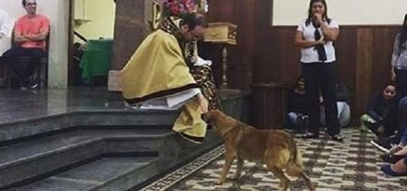 Padre de Sorocaba interrompeu pregação para abençoar cachorro que entrou na igreja