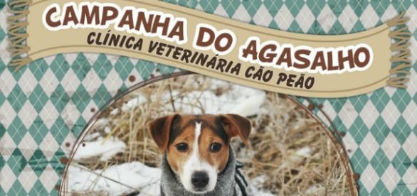 Campanha do agasalho animal realizada pela clínica CãoPeão