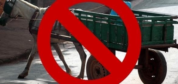 Lei que proíbe carroças é aprovada em São Bernardo