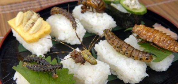 ¿Pescado?, hay quienes prefieren sushi con ciempiés y cucarachas