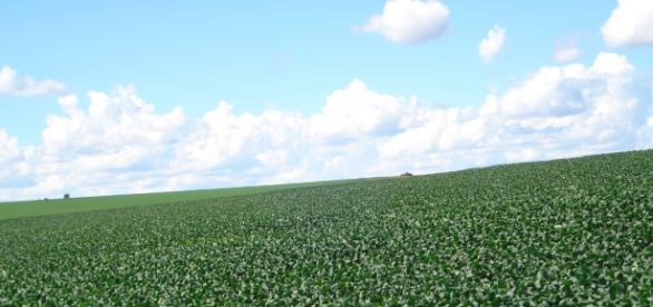 A monocultura em larga escala da soja pode estar prejudicando a agricultura a o abastecimento nacional.