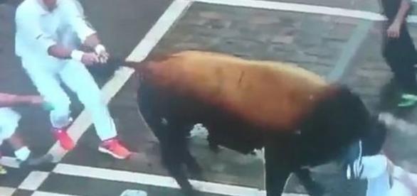 Momentul în care taurul este îndepărtat de pe victima aflată la pământ