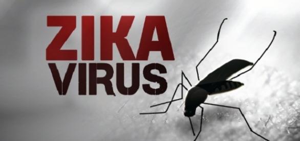 Efectul infestării cu virusul Zika este devastator